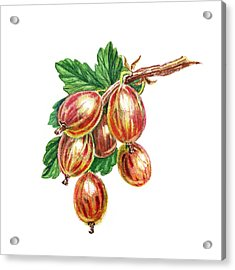 Red And Happy Gooseberries Acrylic Print by Irina Sztukowski