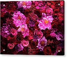 Red And Pink Cut Flowers, Close Up Acrylic Print by Jonathan Knowles
