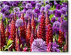 Red And Purple #2 Acrylic Print by Gerry Walden