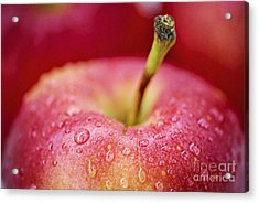 Red Apple Acrylic Print by Elena Elisseeva