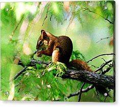 Red Aquirrel Acrylic Print