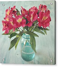 Red Astramaris Flowers Acrylic Print by Kay Pickens
