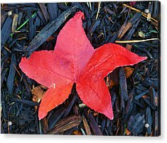 Acrylic Print featuring the pyrography Red Autumn Leaf by P Dwain Morris