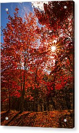 Acrylic Print featuring the photograph Red Autumn Leaves by Jerry Cowart