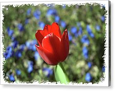 Acrylic Print featuring the photograph Red Baby by Arthur Fix