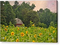 Red Barn Among The Sunflowers Acrylic Print by Sandi OReilly
