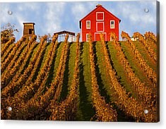 Red Barn In Autumn Vineyards Acrylic Print