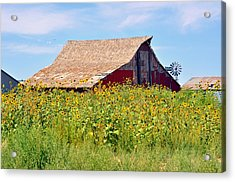 Red Barn In Summer Acrylic Print