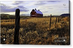 Red Barn In The Golden Field Acrylic Print by Kristal Kraft
