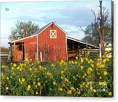 Red Barn With Wild Sunflowers Acrylic Print by Susan Williams