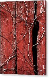 Acrylic Print featuring the photograph Red Barn Wood With Dried Vines by Rebecca Sherman
