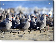 Red Beak Seagull Convention Acrylic Print