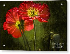 Red Beauties In The Field Acrylic Print by Heiko Koehrer-Wagner