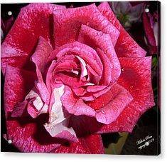 Red Beauty 2  Acrylic Print