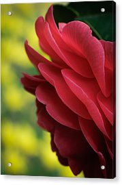 Red Beauty Acrylic Print by James Barber