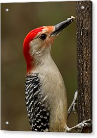 Acrylic Print featuring the photograph Red-bellied Woodpecker by Robert L Jackson