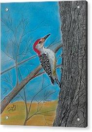 Red Bellied Woodpecker Acrylic Print