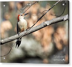Red Belly Acrylic Print by Caisues Photography