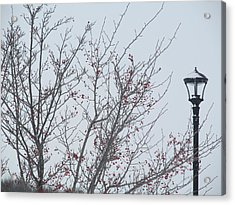 Red Berries And Lamppost Acrylic Print by Tina M Wenger