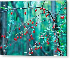 Red Berries In October Acrylic Print by Cara Moulds