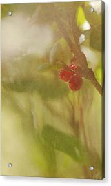 Red Berries Of The Bog Cranberry Acrylic Print by Roberta Murray