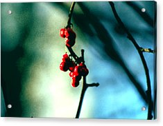 Red Berries On Canvas Acrylic Print