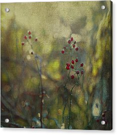 Red Berries On Green After Frost Acrylic Print