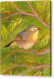 Red-billed Leiothrix Acrylic Print