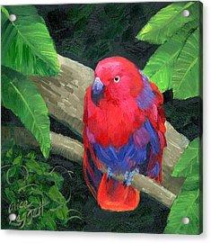 Red Bird Acrylic Print by Alice Leggett