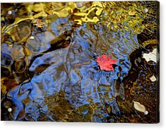 Red Blue And Gold Acrylic Print by Frozen in Time Fine Art Photography