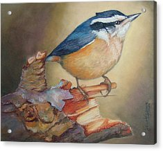 Red-breasted Nuthatch Bird Acrylic Print