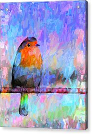 Red Breasted Robin Acrylic Print by Kenny Francis