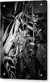 Red Bromeliad And Tricolor Gingers Bw Acrylic Print by Rich Franco