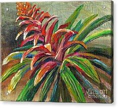 Red Bromiliad Acrylic Print