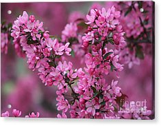 Red Bud Blossoms Acrylic Print by Theresa Willingham