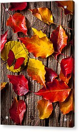 Red Butterfly In Autumn Leaves Acrylic Print by Garry Gay