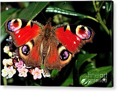 Red Butterfly In The Garden Acrylic Print