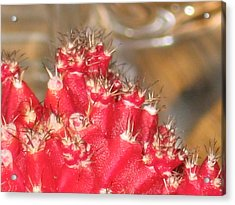 Red Cactus Acrylic Print by Anais DelaVega