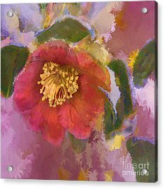 Red Camelia In A Winter Coat Acrylic Print by Terry Rowe