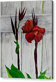 Red Canna Lily Acrylic Print by Melvin Turner
