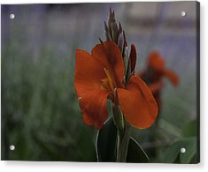 Red Canna Acrylic Print by Martha Burger