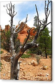 Red Canyon Tree And Rocks Acrylic Print