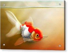 Red Cap Goldfish Acrylic Print