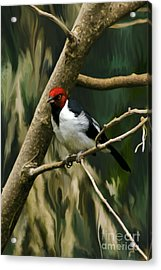 Acrylic Print featuring the photograph Red-capped Cardinal by Adam Olsen