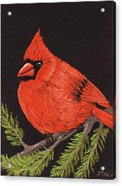 Red Cardinal Acrylic Print by Anastasiya Malakhova