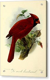 Red Cardinal Acrylic Print by Rob Dreyer