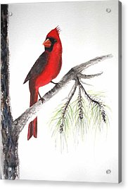 Acrylic Print featuring the painting Red Cardinal by Sibby S