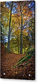 Red Carpet In Reelig Glen During Autumn Acrylic Print