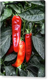 Red Chilli Peppers Acrylic Print