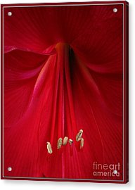 Red Acrylic Print by Chris Anderson